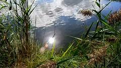 DSCN5213 nature paysage 35 (lac reflet du soleil) Vallières (jeanchristophelenglet) Tags: santeuilfranceétangdevallière nature natureza paysage landscape paisagem reflet reflection reflexo