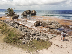 Barbados Aerial Photography 2018-17 (jpDesignTheory) Tags: animalflowercave barbados drone travel