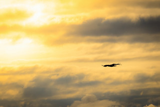 Seeadler 6 in Norwegen
