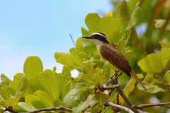 Waiting (Martha VFS) Tags: smileonsaturday 7dwf nature fauna bird uniflona