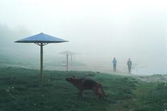 ... (tkachenko.as) Tags: kursk takumar5014 vintagelens spring spotmatic fog stevenking