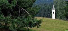 Dolomiti - Il campanile nel bosco (Jambo Jambo) Tags: parconaturalepaneveggio foresta forest campanile belltower passorolle primierosanmartinodicastrozza sanmartinodicastrozza trento trentino italia italy alpi dolomiti dolomitesalps montagne mountains sonydscrx100 jambojambo paledisanmartino