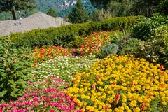 DSCF4438.jpg (RHMImages) Tags: garden xt2 summer flowers crystalhermitage fuji nevadacounty nevadacity fujifilm anandavillage