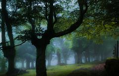 URKIOLA  FOG (juan luis olaeta) Tags: canon paisajes landscape forest pagoa bosque basoa fog foggy natura nieblas laiñoa basquecountry euskalherria