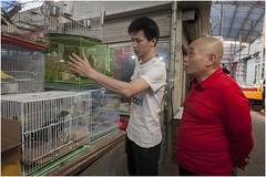 Shaghai Wanshang Huaniao Market  0014 (Fermin Ezcurdia) Tags: shanghai shanghaihuttons zhujiajiao longhua bunddeshanghái pudong shanghaiworldfinancialcenter jinmao people'ssquare xintiandi yuyuan centurypark suzhou perladeorient tianzifang nanjing wanshanghuaniaomarket