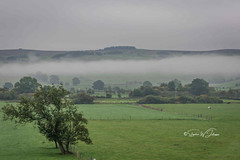 SJ1_1279 - Cloud inversion (SWJuk) Tags: skipton england unitedkingdom swjuk uk gb britain yorkshire northyorkshire cloud cloudinversion fields farmland sheep trees 2018 sep2018 autumn nikon d7200 nikond7200 18300mm rawnef lightroomclassiccc