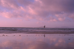 Without Wings (sommerbe) Tags: sunset ocean surfer clouds beach reflection clear clearity sky water seaside sand bay