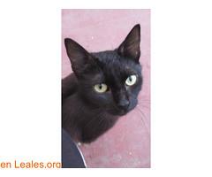 ADOPCION RESPONSABLE POR FAVOR. (Leales.org • tu guía animable) Tags: adopta adoptar adoptanocompres noalmaltratoanimal adopción sebusca extraviado perdido perro gatos lealesorg