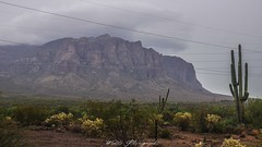 (Joshua Wells Photography) Tags: arizona forest desert landscape panasonic lumixg7 mirrorless storm rain raining cacti cactus wasps mountains mountain offroad