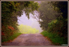 Matin d'automne (Les photos de LN) Tags: automne brume brouillard matin nature paysage couleurs teintes