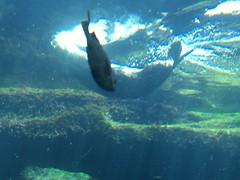 IMG_1346 (paschulea) Tags: monterey aquarium