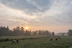 Sunrise (Martine Lambrechts) Tags: sunrise misty nature landscape morning clouds