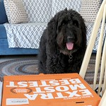 Happy National Dog Day!  Share your pizza! thumbnail