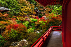 Japanese Dream (BeNowMeHere) Tags: ifttt 500px witness benowmehere colour dream fall fallcolours haruki japan kyoto landscape murakami murakamisfall nature red temple autumn color colorful colourful garden japanese japanesedream reflection sacred serenity travel trip tree terrace bench path footbridge promenade tourism townscape steps roof