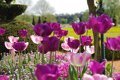 JLF14563 (jlfaurie) Tags: maintenon château castillo palace 22042018 jardin garden tulipes tulipanes tulips mechas gladys amigos friends michel magda sergio primavera printemps pentaxk5ii mpmdf jlfr jlfaurie spring flowers flores fleurs agua eau water canal intérieurs interiores inside