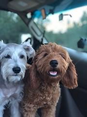 GInger's sweet Lola