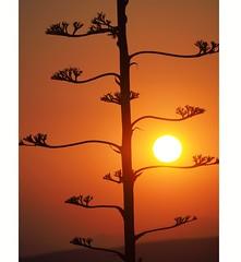 Sunset in Athens (borisvasilev) Tags: sunset nature naturalwonder naturephotography athens greece travelolympus travelphotography travel sunsetcolours sun
