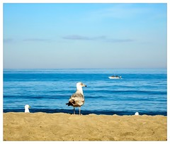 Beach, Gulls, and a Boater | Sliders Sunday