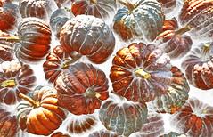 Pumpkin Time (VenusTraum) Tags: kürbis zeit pumpkin time cucurbita pflanze halloween groovy frucht fruit