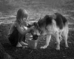 Girl and German Shepherd (piano62) Tags: dogs mansbestfriend evolution peace love tenderness understanding kindness loyal portrait blackandwhite monochrome children sonya7rii sony85mmf18