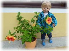 Luis und der Hibiskus / Luis and the hibiscus (ursula.valtiner) Tags: blume flower hibiskus hibiscus blüte puppe doll luis künstlerpuppe masterpiecedoll gummistiefel rubberboot regenmantel raincoat