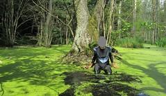 Catsuit bath in morass (wetmuddy) Tags: outdoor forest fun lycra spandex catsuit unitard skinsuit wet wetlook mud muddy bath bathing morass sumpf morast swamp