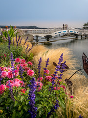 Flowers and bridge (kellypettit) Tags: nanaimo bc maffeopark waterfront ocean sundaystroll iphonex summer westcoast flowers scenic happy kellypettitphotography