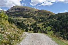 sentiero (davide.alberani) Tags: merano merano2000 mountain montagna sentiero track pathway bolzano bozen trentino