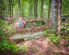 Old Car City 156 (augphoto) Tags: augphotoimagery abandoned auto automobile car decay old texture weathered white georgia unitedstates
