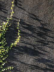 254/365: Creeping shadows