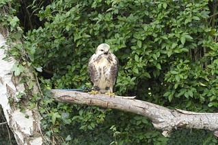 Falconry Centre Hagley