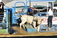 "Baker County Tourism – basecampbaker.com 47190 (Base Camp Baker) Tags: oregon ""easternoregon"" ""bakercountytourism"" basecampbaker ""basecampbaker"" ""bakercounty"" rodeo cowboys ""bakercitybroncandbullriding"" ""bakercity"" ""oregonrodeo"" ""minersjubilee"" oregonrodeo ramrodeo traveloregon travel tourism roughstock rodeolife bulls bullriding"