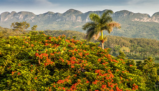 The Colours Of Viñales