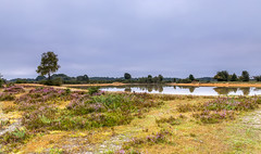 Parched (nicklucas2) Tags: landscape newforest andrewsmare heather heath pond reflection water