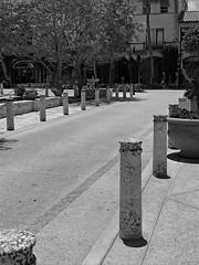 Quiet Street 43 (LarryJay99 ) Tags: palmbeach urban reets streets bollards street streetview town urbancontainers pottedplants blackwhite florida pathways lines perspective composition leadinglines