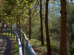 P1140021 (raudio) Tags: alberi strada