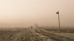 The Poetry of the Wasteland (Netsrak) Tags: dezember eu europa europe herbst landschaft morgen natur nebel sonne sonnenaufgang autumn december fall fog landscape mist morning nature sun sunrise tree trees baum bäume