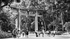 Tokyo (drasphotography) Tags: tokyo tokio japan shrine monochrome monochromatic blackandwhite bw bianconero schwarzweis travel travelphotography reisefotografie drasphotography nikon d810 nikkor2470mmf28 urban trees albero bäume park sw