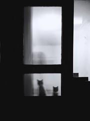 (soleá) Tags: kitticat love animals carmengonzález soleá gato neko photography door blackandwhite pets feline cats
