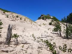 Les Dunes et La Végétation. 2018 07 28 13:41.25 (Sandbanks Pro) Tags: sandbanksprovincialpark sandbanks westlake princeedwardcounty ontario canada provincialpark parcprovincial dune sand sable summer été végétation touristique paysage nature vacance holiday