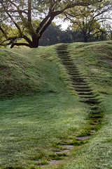 Fort Washington Park Morning Path (ljloughphoto) Tags: stairs morning steps tree dew fortwashington maryland grass path