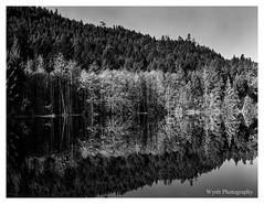 Reflection(2) (wynb1) Tags: wynb blackwhitephotos blackandwhite blackandwhitephotos bw trees treesblackandwhite water waterblackandwhite sky skyblackandwhite