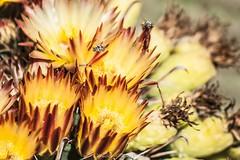 12169 (Joshua Wells Photography) Tags: canon desert cactus cacti canoncamera t4i canont4i 5d teamcanon landscape mountains mountain arizona az photography canonlens scottsdale