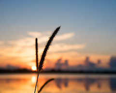Natures Paint Brush (DASEye) Tags: davidadamson daseye nikon silhouette sunrise dawn sky