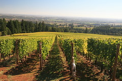 IMG_6611 (willsonworld) Tags: willamette valley wine tasting dan diane cat jose david dave grapes 2014