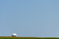 Where the tall corn grows (Rural Roads Photography) Tags: iowa agriculture blue corn crop farming field food green harvest industry silo sky space stalks summer tassels