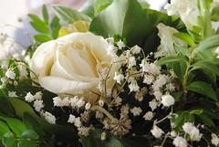 (degreve.sarah) Tags: flowers roses white bouquet