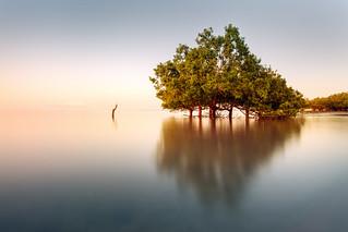 Sunrise at East Point mangroves
