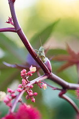 Waiting For... (Man in Hat Photography) Tags: outdoors outside nature insect grasshopper macro micro d750 utah