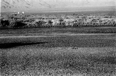 Beyond All Belief The Colorado River (Shot by Newman) Tags: shallow dryriver ilforddelta stones ilford400 blackwhite 35mm shotbynewman thesouthwest mojavedesert coloradoriver bonedry bwphotograph nature ilfordbwfilm daylight 35mmminolta